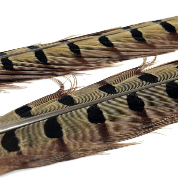 Pheasant Tails